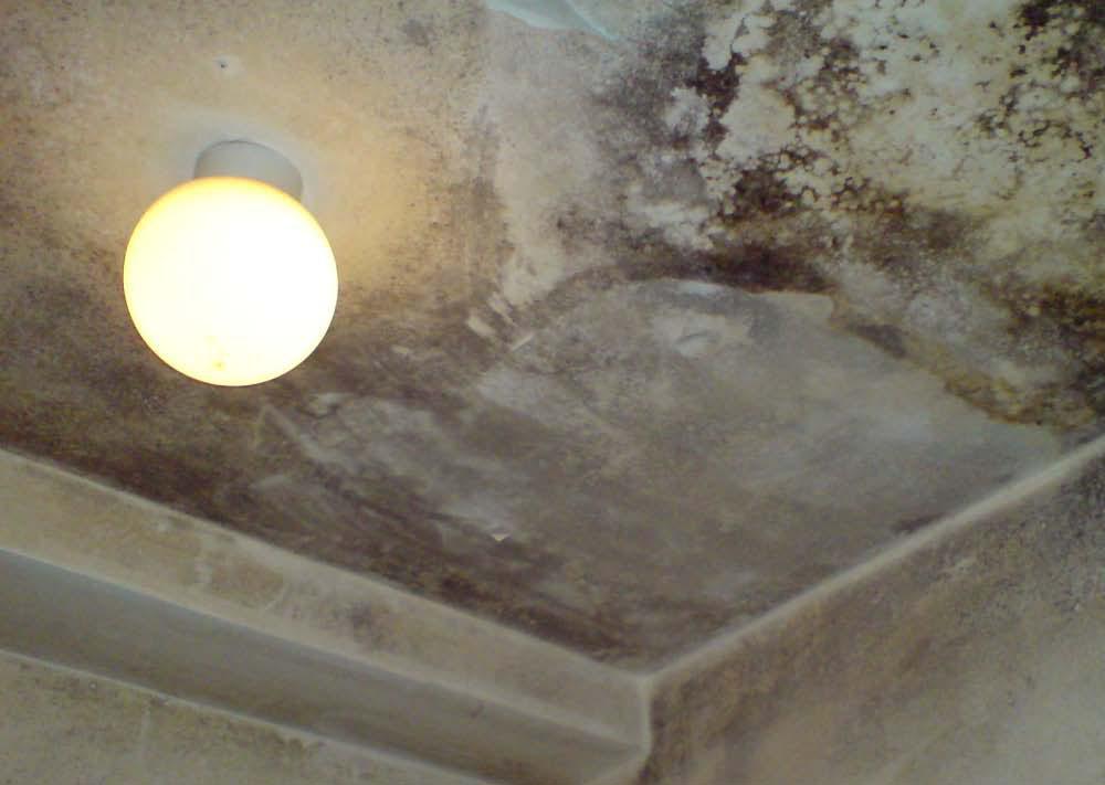 Non Toxic Black Mold Removal Photos